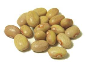 Vallarta bean