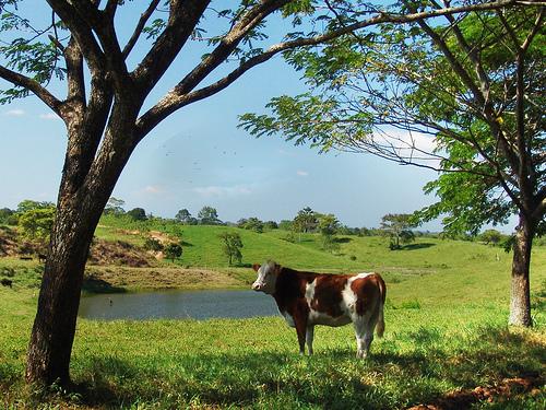 File:El paisaje / The landscape.jpg