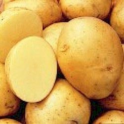 File:Yukon Gold Potato Seeds.jpg