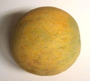 Ambrosia melon