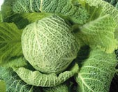 Irishcabbage