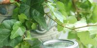Mint Sun Tea