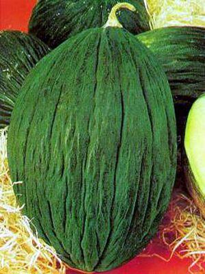 Spanish melon