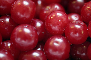 Sour Cherries close up