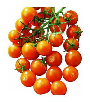File:Cherry tomatoes.jpg