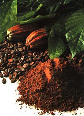 File:Cacao.jpg
