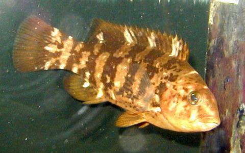 File:Blackfish.jpg