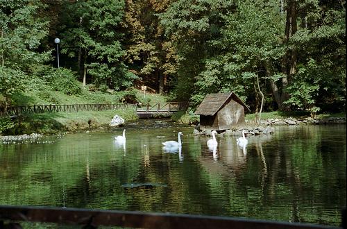 File:Izvor rijeke Bosne, BIH.jpg