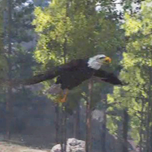 File:Eagle-04.jpg