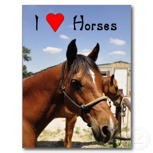 I love horses western horse postcard-r64f6d9ffe2204280a3435ac8ef6c75cd vgbaq 8byvr 512