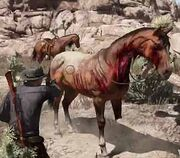 Dead horse2