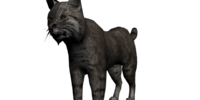 Roberto the Bobcat