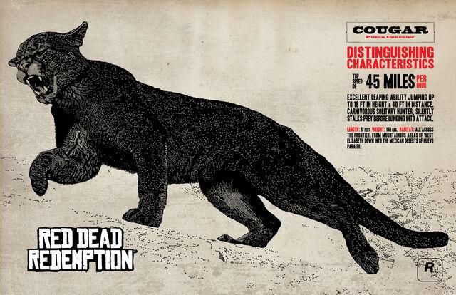 File:Cougar-art.jpg