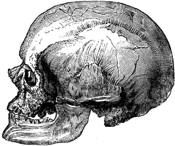 File:717px-Cro-Magnon-male-Skulll.png