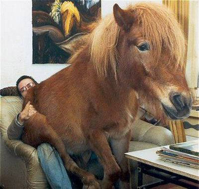 File:Horse-sit.jpg