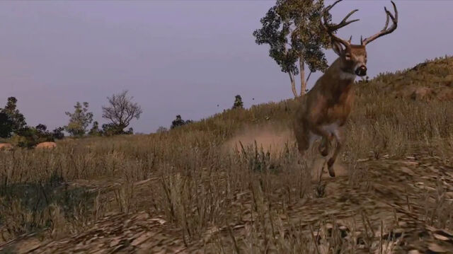 File:Rdr buck.jpg