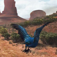 Songbird-01