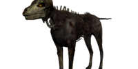 Undead Coyote