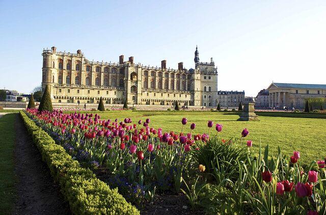File:Tulipes du château de Saint-Germain-en-Laye.jpg