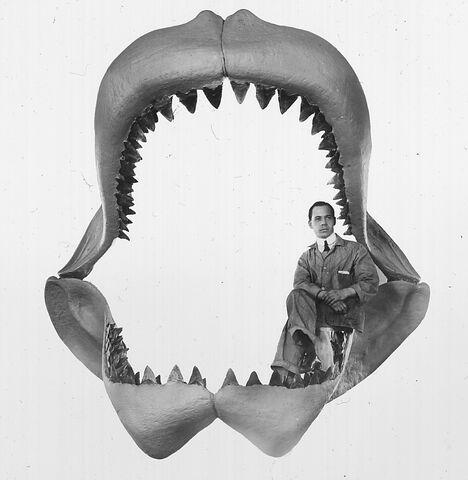 File:Carcharodon megalodon.jpg