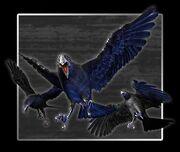 CLUB96 Crow
