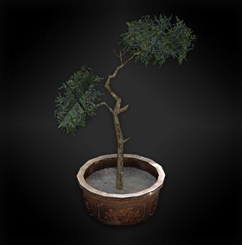 File:Plant (lanshiang) diorama.png