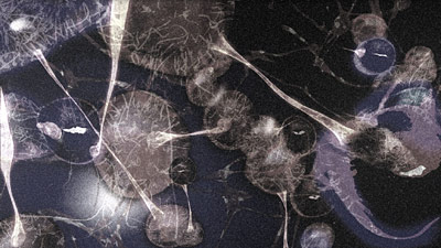 Archivo:Virus Fusion 3.png