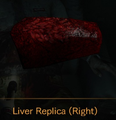 File:Liver Replica Right.jpg
