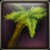 Runerooted Juniper Icon