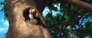 RIO rafael peeking out of his house