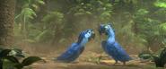 Blu and Roberto