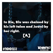 Rio-Wiki-100Days100Facts-083
