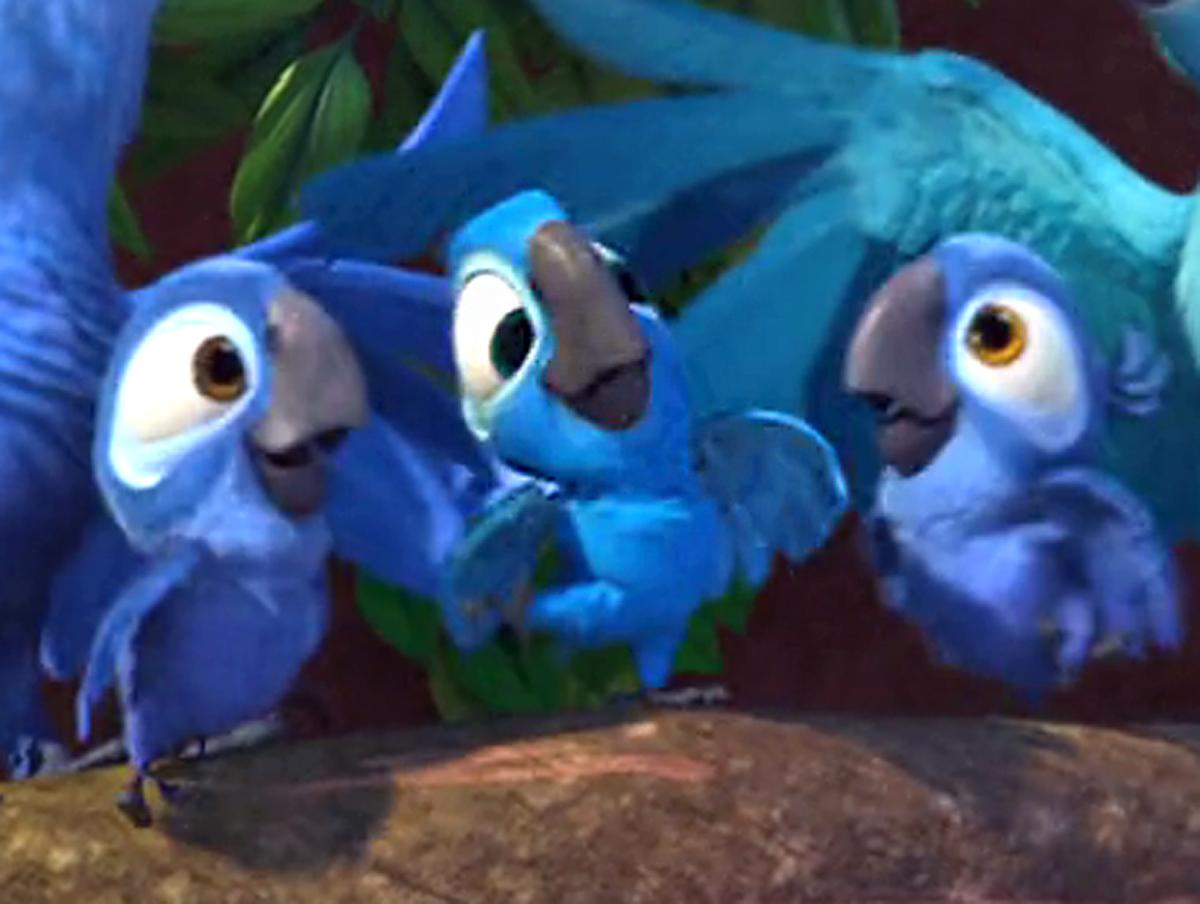 Blue macaws in rio - photo#10