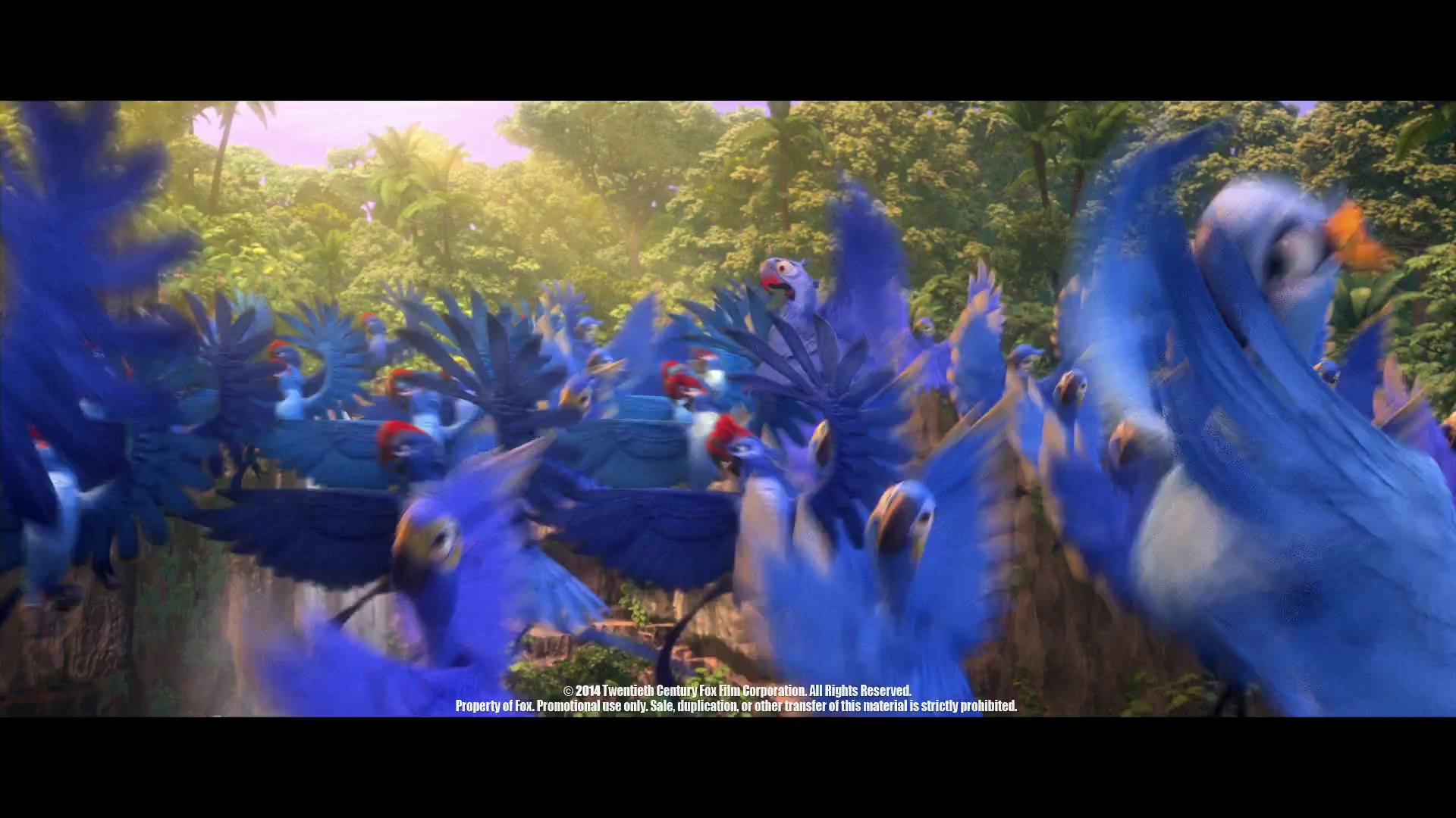 image discover the forest with rio 2mp4 000024657jpg
