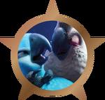 Bronze Badge - Bird Catcher