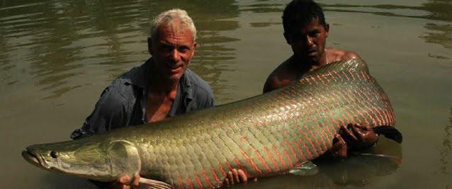 Arapaima   River Monsters Wiki   FANDOM powered by Wikia