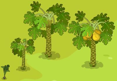 Papaya-Growth