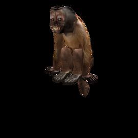 catalog dexter the monkey roblox wikia wikia