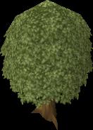 132px-Oak Tree