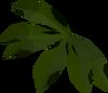 Kelp (Mogre Camp) detail