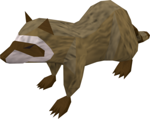 Raccoon (brown) pet