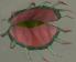 Stranger plant chathead