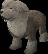 Sheepdog (grey) pet