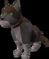 Dromund's cat