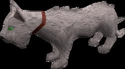 Wily cat (white) pet