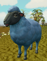 Sick-looking sheep (3) (dyed)