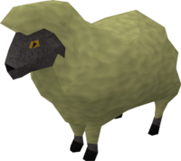 Sick looking sheep 4