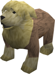Sheepdog (yellow) pet