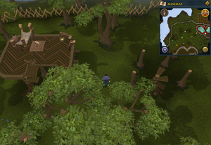 Compass clue Tree Gnome Stronghold north of the gnomeball field