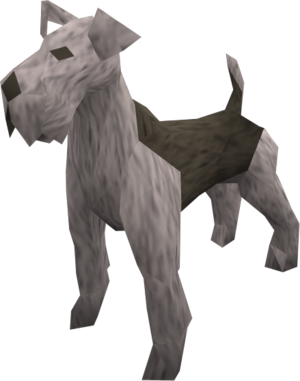 Terrier (grey) pet
